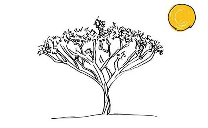 acacia-web