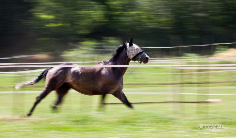 race horse training, beddizole