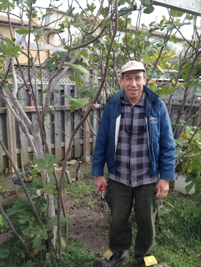 Alberto with one of his in-ground fig trees.