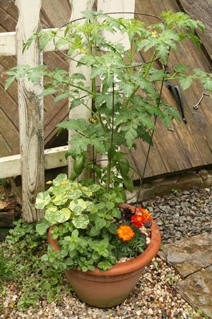 Signe's garden