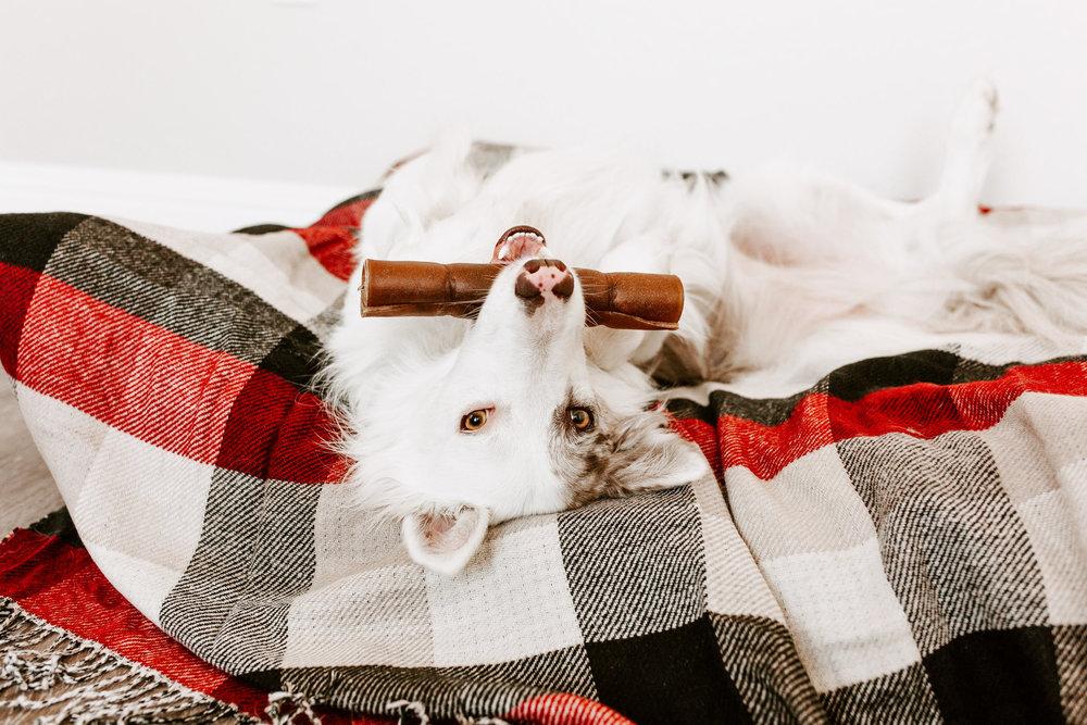 farmhound1.jpg