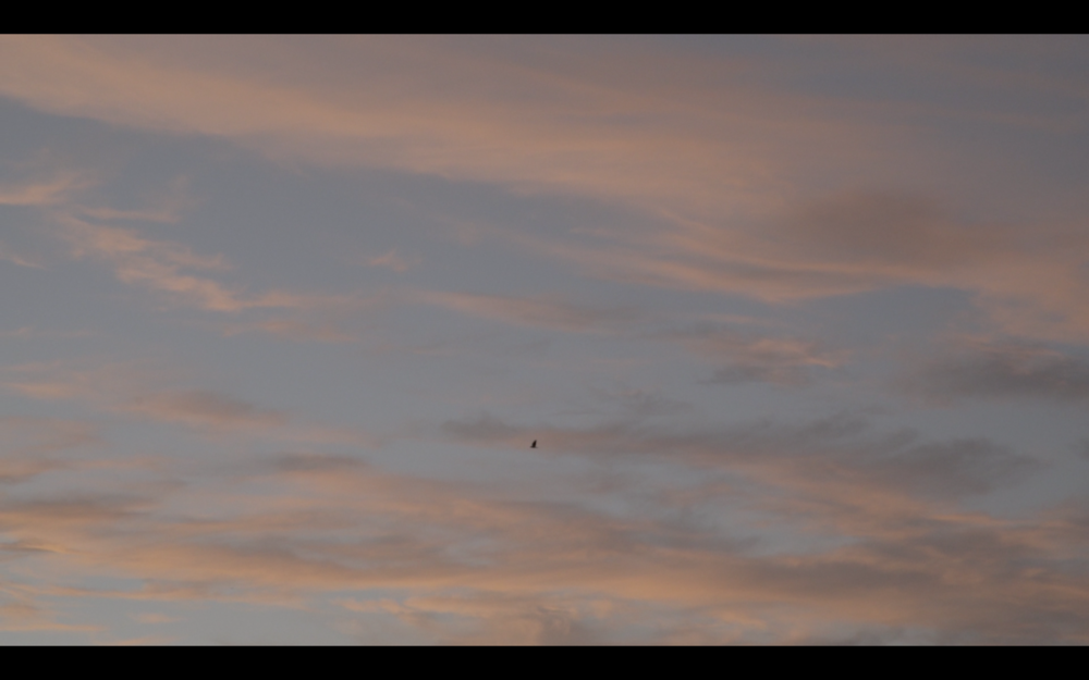 pink clouds bird.png