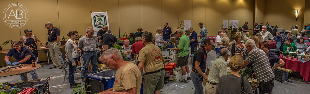 Club members getting their bonsai material ready to be judged