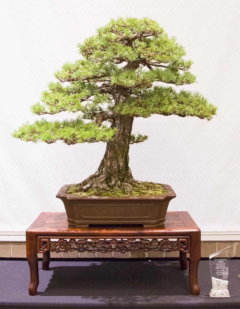 BonsaiTree40.JPG