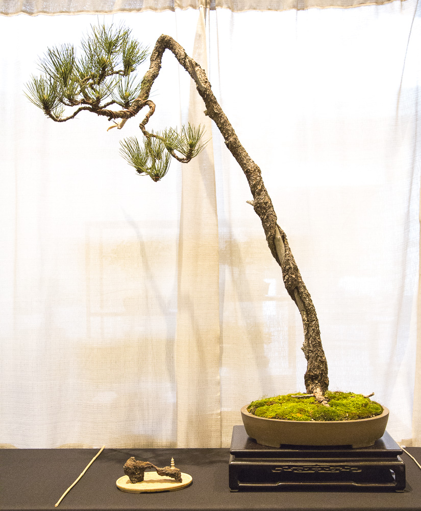 BonsaiTree61.JPG