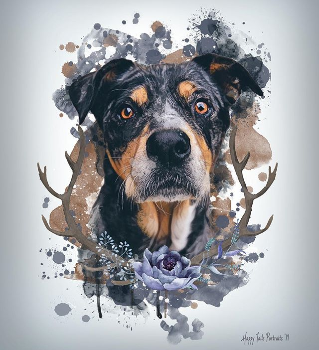 How gorgeous is this portrait of the badger?! 😍 Thank you @happy_tails_portraits for surprising us with this beautiful piece! It's absolutely stunning, & we love it!! 💙 . . . #badgerart #portrait #art #doglover #digitalart #artist #dogportrait #doglife #worldofcutepets #dailybarker