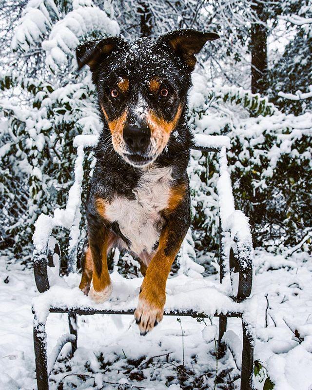 When you're tired of mawm taking your picture... 👋🏼 #byefelicia . . . #huffpostgram #dailybarker #optoutside  #instagrambham #exklusive_shot #snowday #ruffpost #weeklyfluff #thisisalabama #letitsnow #lifeofadventure #mydogiscutest #sendadogphoto #worldofcutepets #nikonnofilter #dogscorner #buzzfeedanimals #excellent_dogs #bestwoof #nikonlove #topdogphoto  #gramoftheday #vol #aov #visualshotz #ynotoutdoors #thegreatoutdogs #gallery_legit @instagram