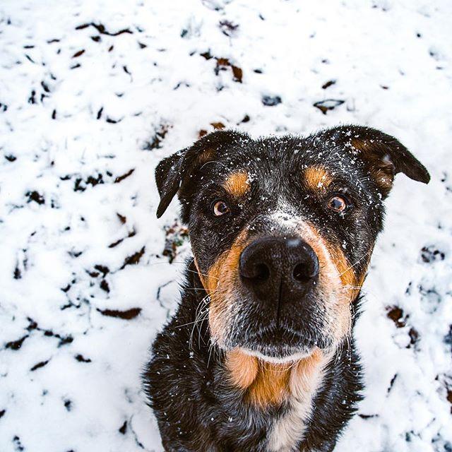 """So basically what you're saying is that Santa Paws is some stranger who is going to break into our home through our chimney so he can leave me presents?"" 🤨 . . . #huffpostgram #dailybarker #optoutside  #instagrambham #exklusive_shot #snowday #ruffpost #weeklyfluff #thisisalabama #letitsnow #lifeofadventure #mydogiscutest #sendadogphoto #worldofcutepets #nikonnofilter #dogscorner #buzzfeedanimals #excellent_dogs #bestwoof #nikonlove #topdogphoto  #gramoftheday #vol #aov #visualshotz #ynotoutdoors #thegreatoutdogs #gallery_legit #whpcelebrate @instagram"