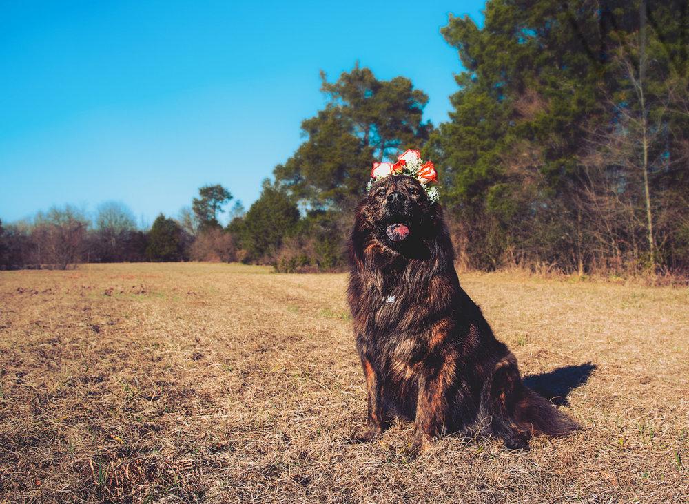 Meet Koda -