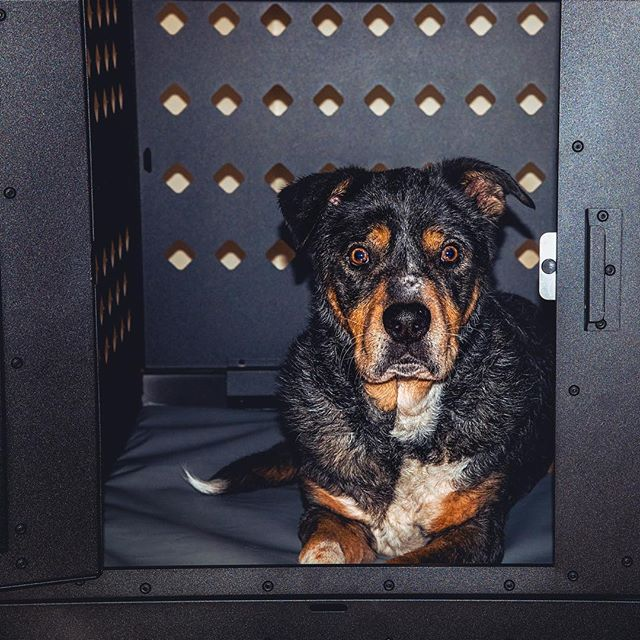 """""""Mom…do you hear the sky growling?!"""" . So it's been a stormy past few days in Alabama, and there is more rain ahead this week. The badger is always confused by the thunder and will usually respond by barking at the sky or ceiling. He's been utilizing his crate more these past few days with the weather being all wonky. I guess he feels that the thunderstorms can't get him if he's in his crate haha. Does your pup react to stormy weather???? . Collapsable Crate in Black from @impactdogcrates - visit the link in their bio to see more! #impactpups #ad . . . #huffpostgram #dailybarker #kennel #instagrambham #ruffpost #weeklyfluff #thisisalabama #gardenandgun #mydogiscutest #doglife #dailyfluff #sendadogphoto #dogsofficialdog  #worldofcutepets #nikonnofilter #dogscorner #buzzfeedanimals #excellent_dogs #bestwoof #nikonlove #topdogphoto #vol #aov #visualshotz #dogcrate"""