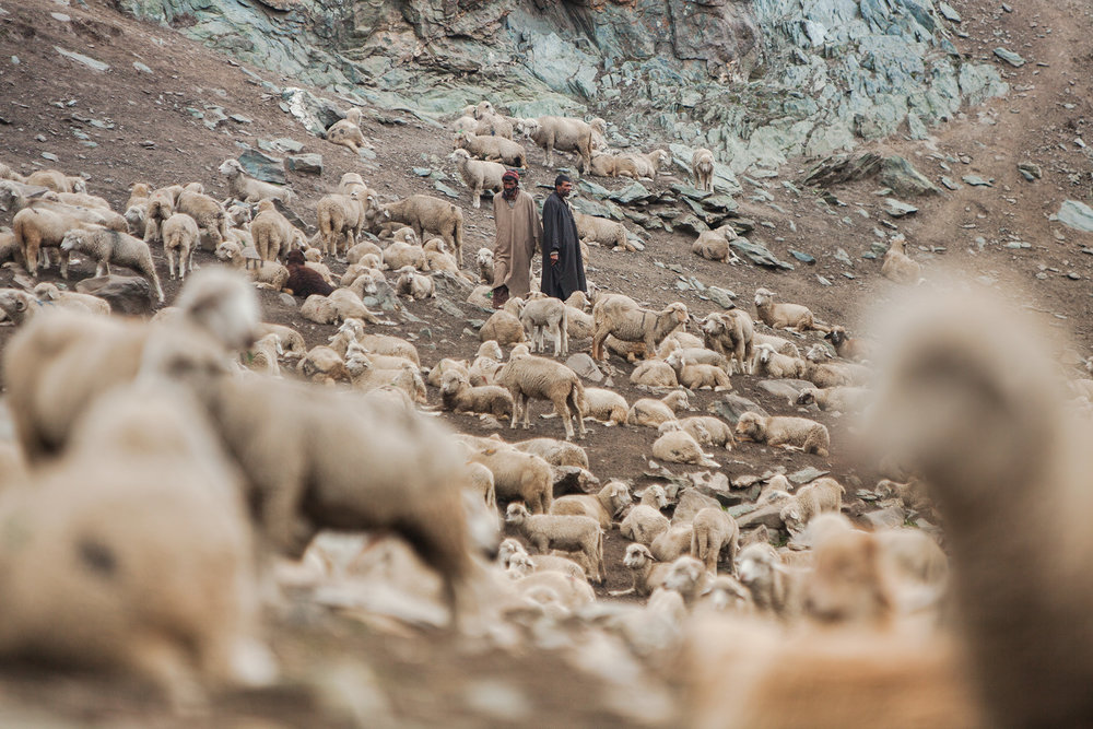 18-Ozzie-Hoppe-Photographer-India-Himalaya.jpg