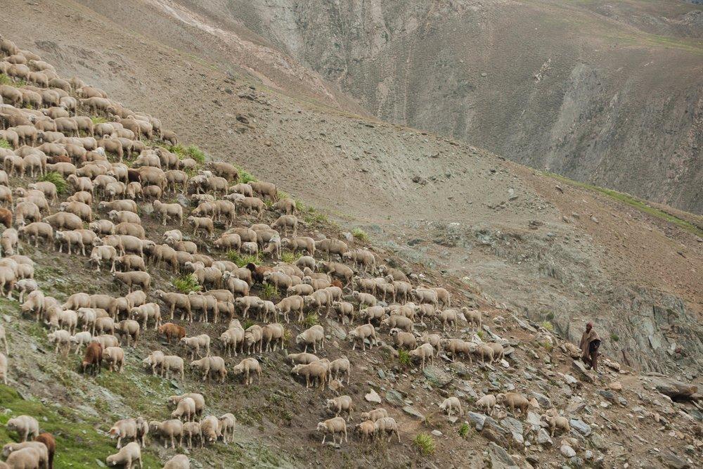 E - Ozzie-Hoppe-Photographer-India-Himalayaj.jpg