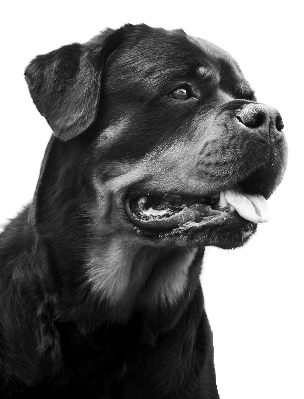 DOG BOOK pics 1034redobw.jpg