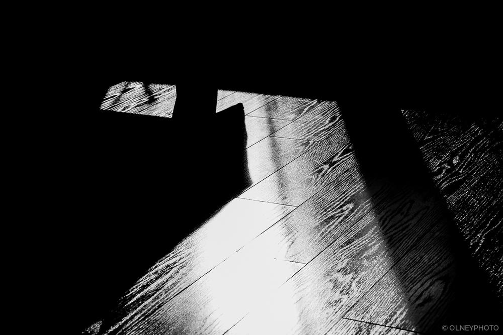 Contraste sur plancher de bois OLNEY Photographe Sherbrooke