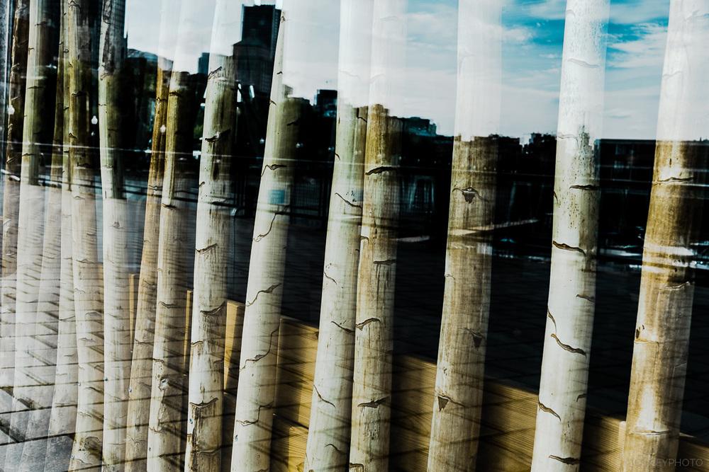 Tiges de bambou en vitrine et reflet de la ville en Classic Chrome OLNEY Photographe Sherbrooke
