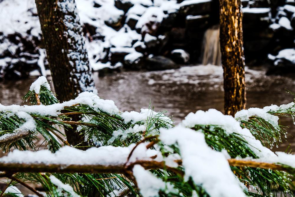 Décharge d'eau de pluie dans un sous-bois de Sherbrooke OLNEY Photographe