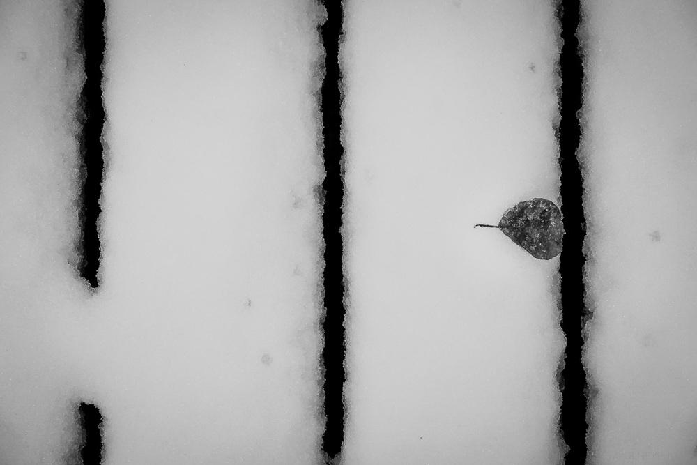 Feuille encastrée dans la neige en noir et blanc photographie de rue olney photographe sherbrooke