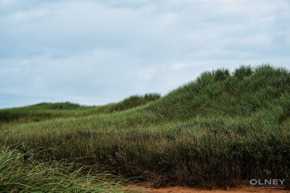 Dunes in Cavendish PEI olney photographe sherbrooke