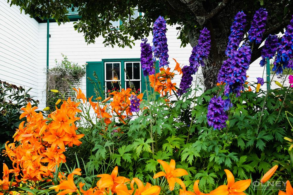 Ann of Green Gables park olney photographe sherbrooke