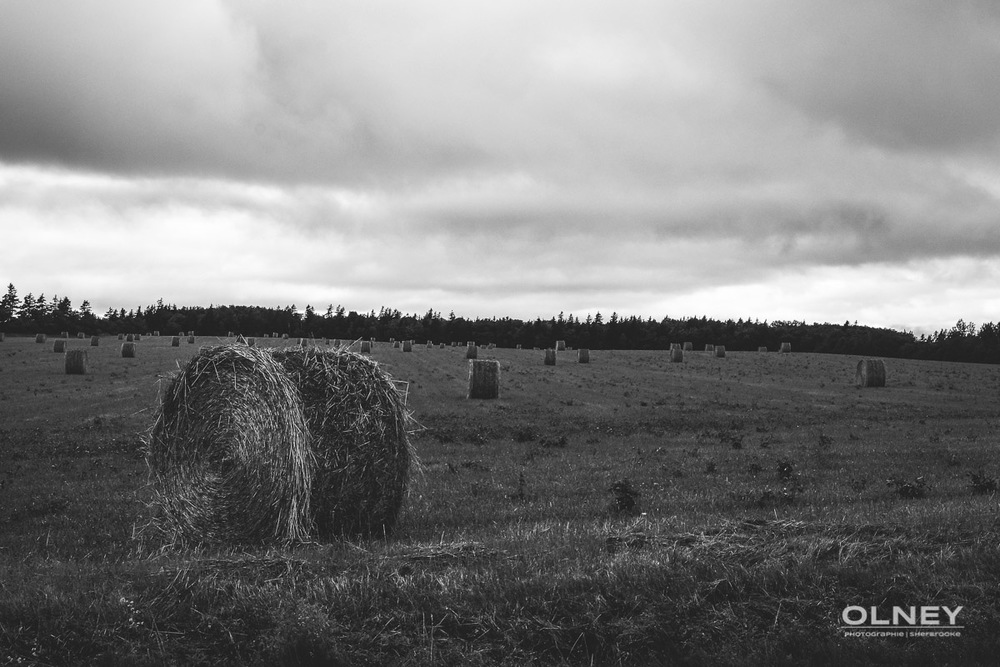 Hay on prince edward island olney photographe sherbrooke