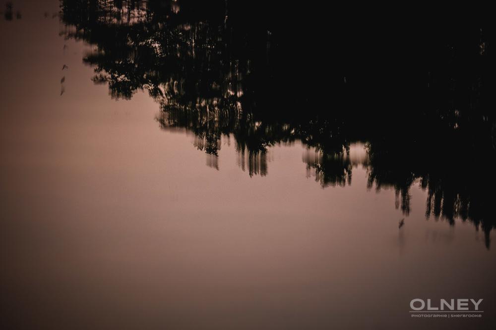 reflets dans eau parc lafontaine street photography olney photographe sherbrooke