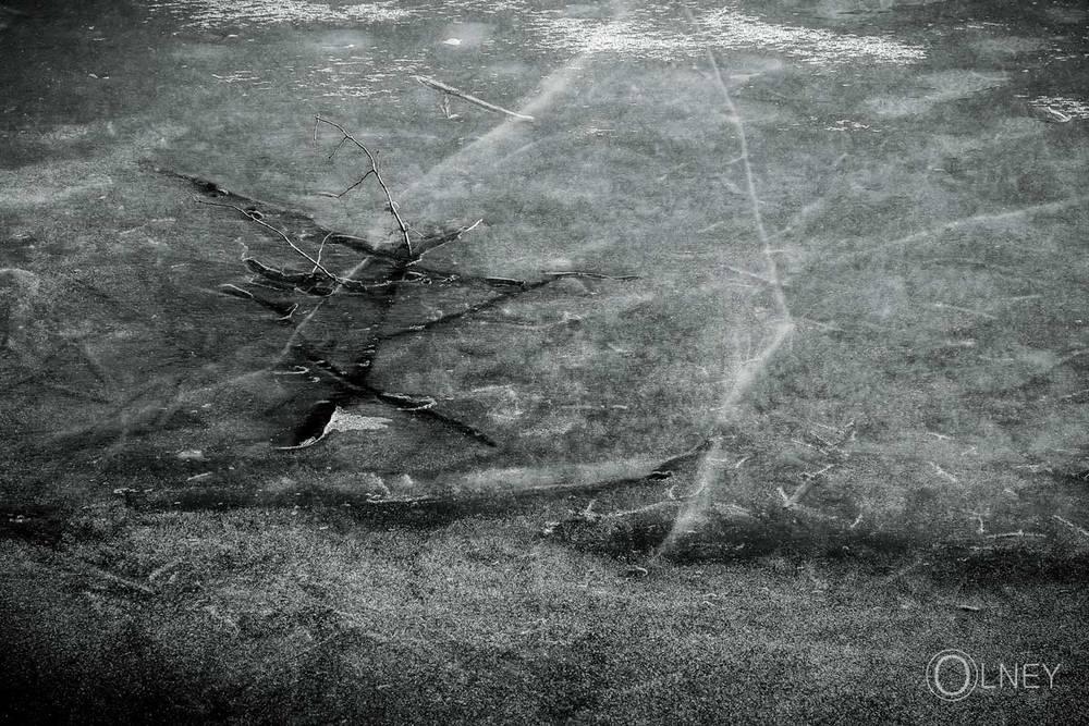 branche prise dans la glace