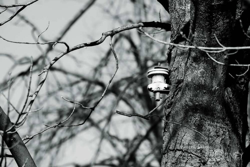 pièce électrique fixée à un arbre