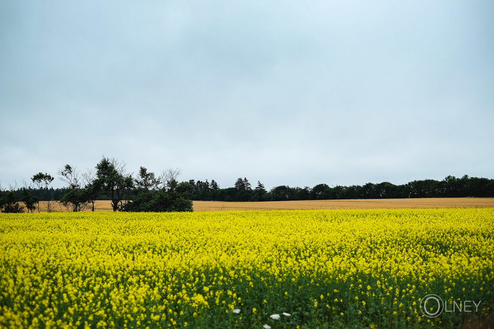 Field in North Rustico Prince Edward Island