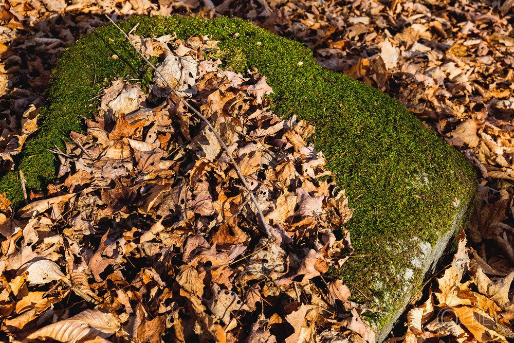 pierre et mousse au bois beckett à Sherbrooke QC en Estrie