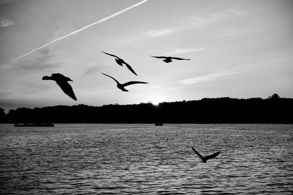 sunset and birds on lac des deux-montages QC
