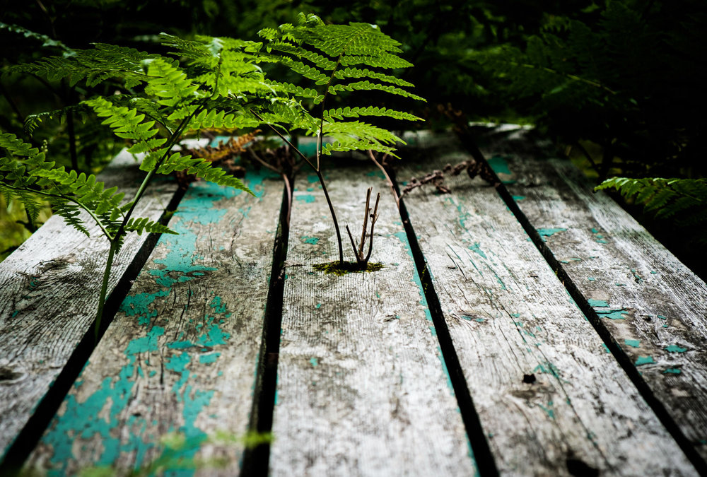 life finding it's way through an old picnic table