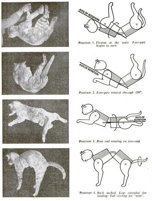 Cat falling.jpg