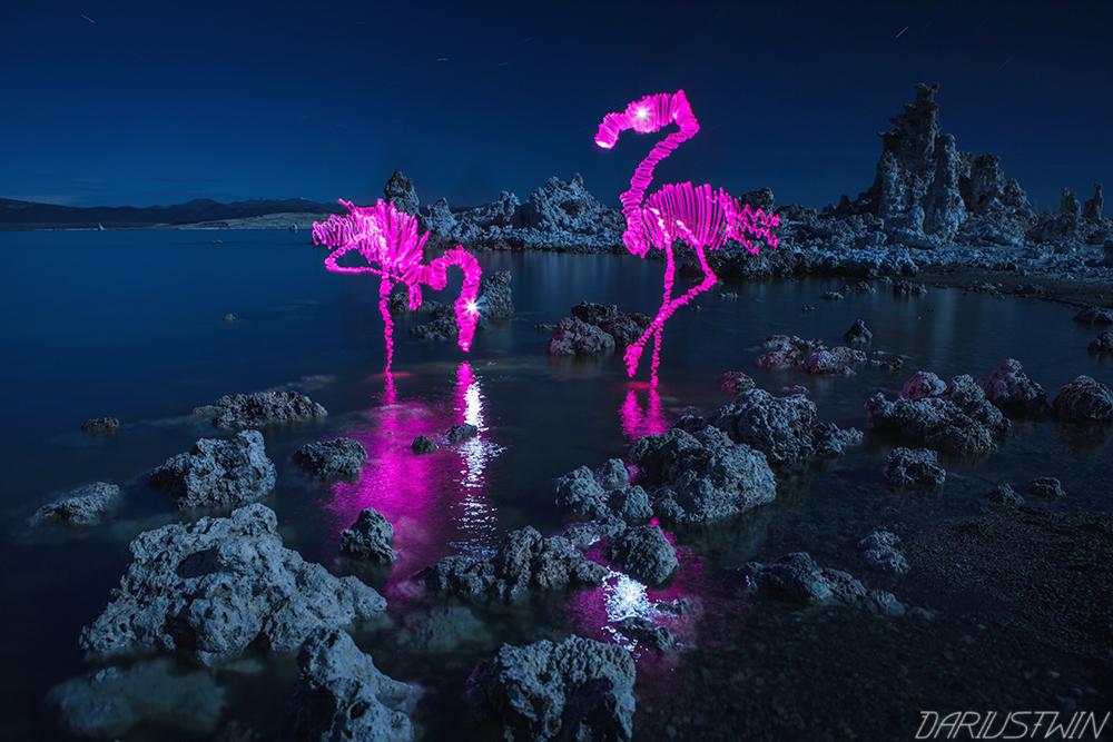 Full Moon Flamingos