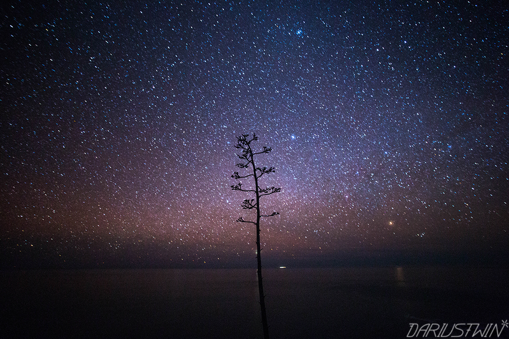 Space_Agave_stars_photography_dariustwin_astrophotography_ocean_pacific.jpg