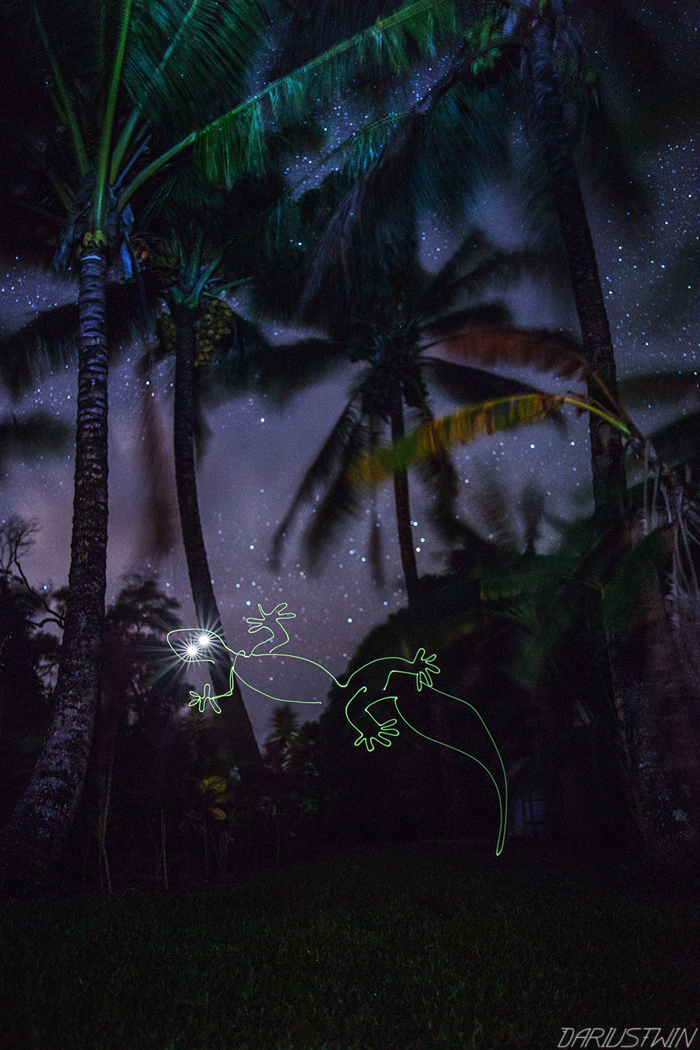 gecko_art_photography_lightpainting_hawaii_maui_animal_reptile.jpg