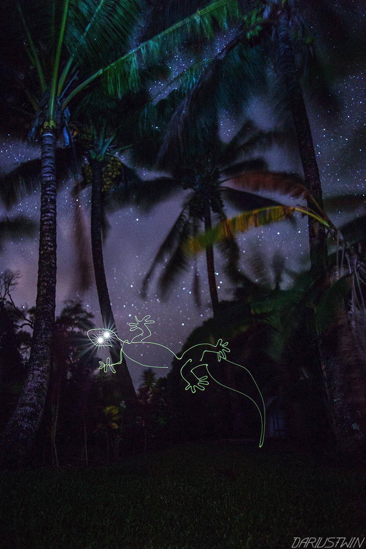 gecko, lightpainting, hawaii, maui, animal, reptile