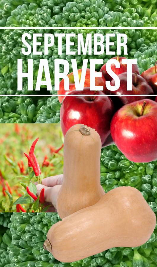sept%2Bharvest.png