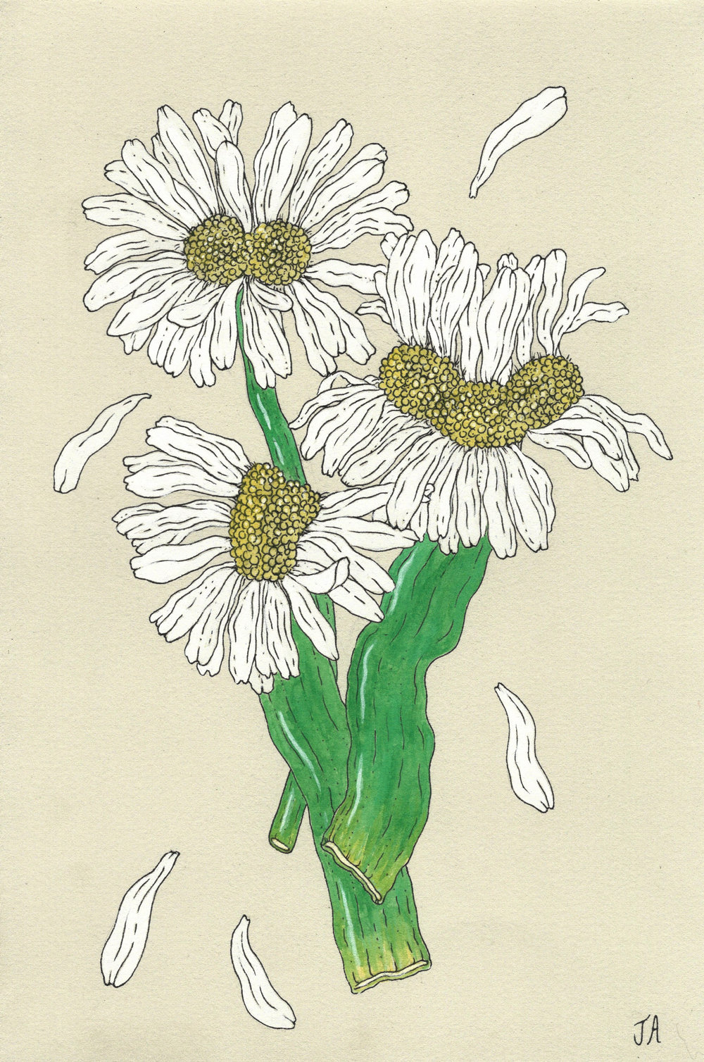 mutated daisy flower.jpg