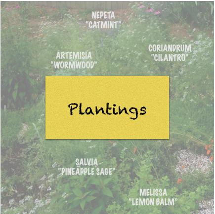 Plantings.png