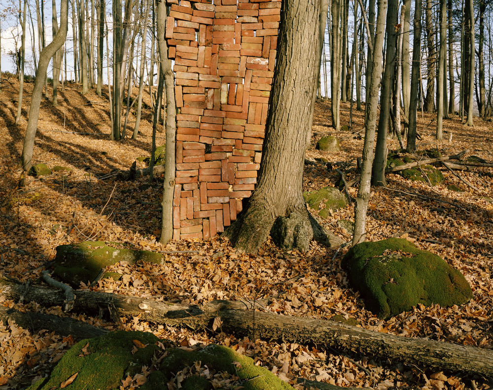 Brick Wall Between Trees
