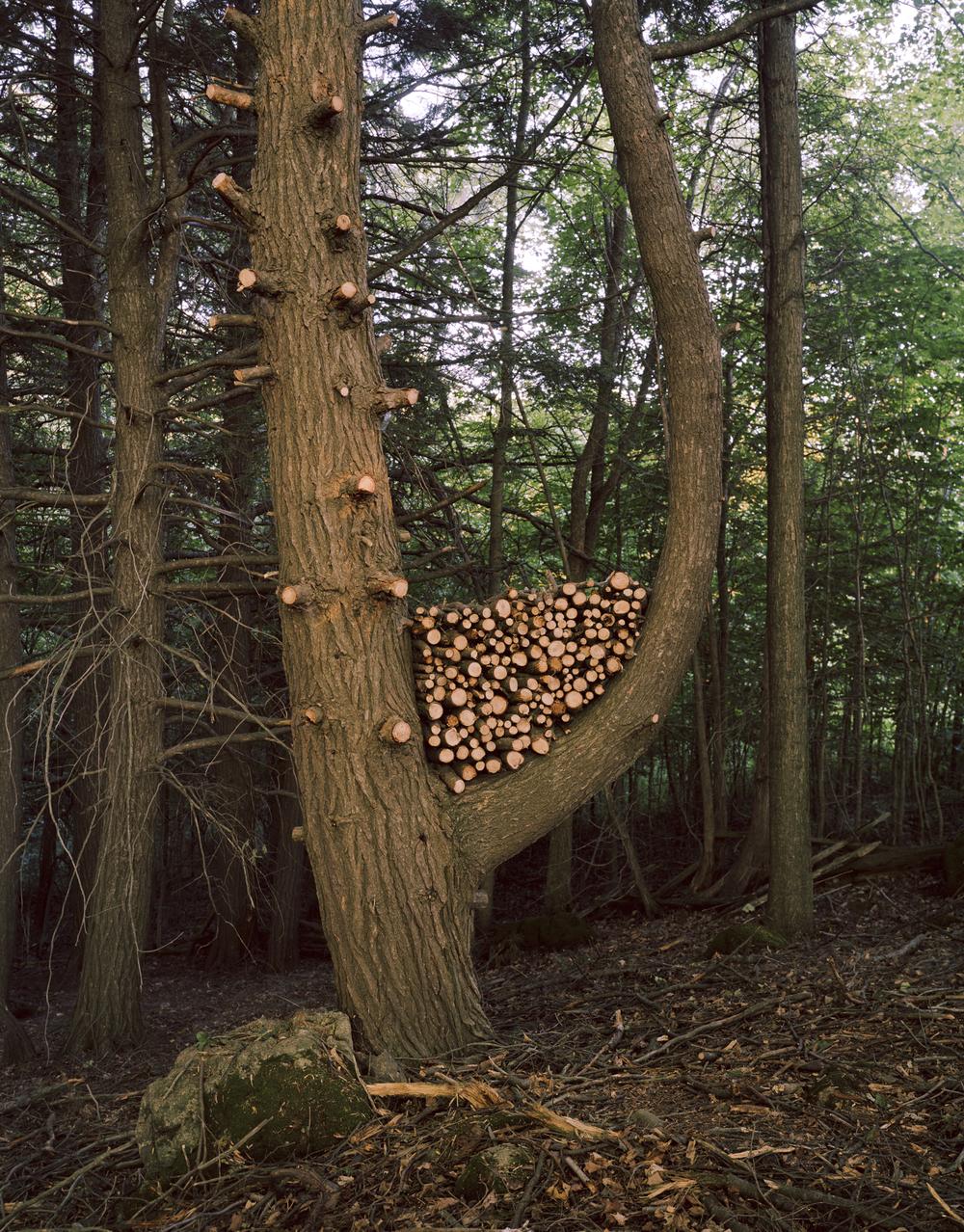 J Tree