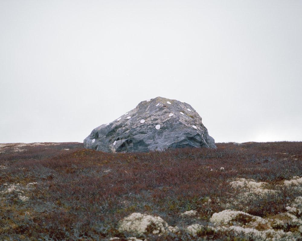 tortilla lichen