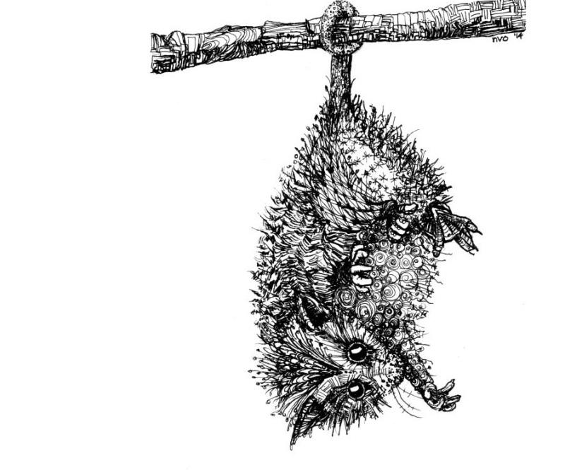 03_14nvo_Opossum_pen.jpg