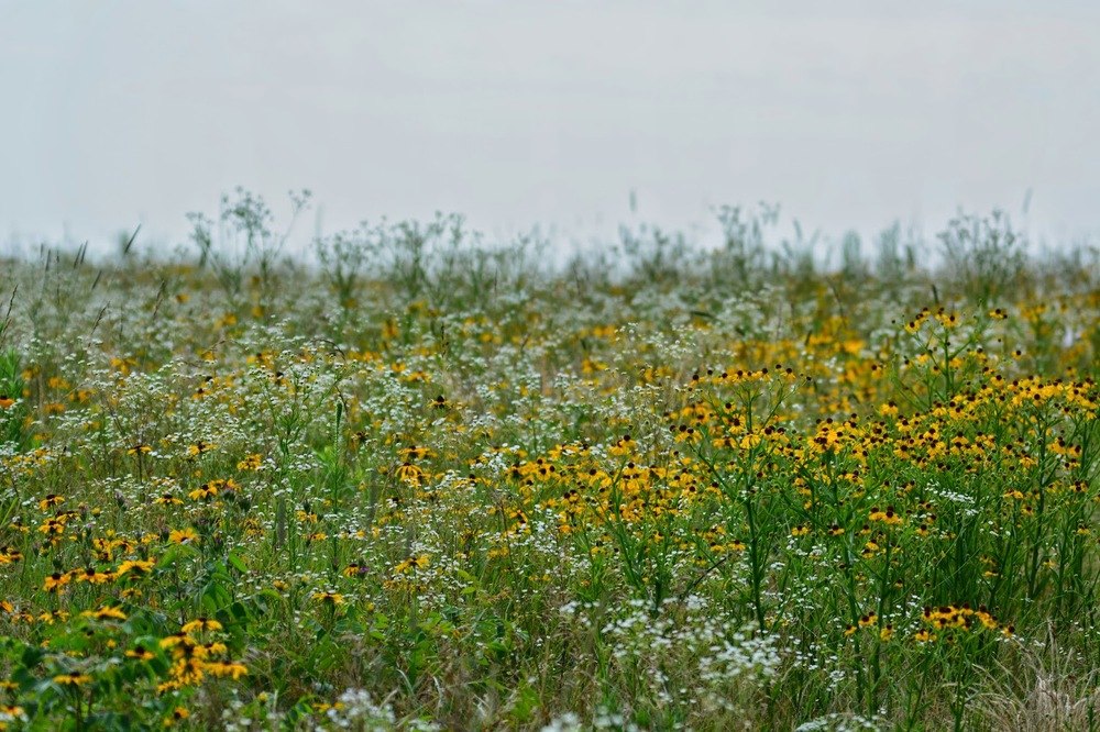 Diamond Grove Prairie