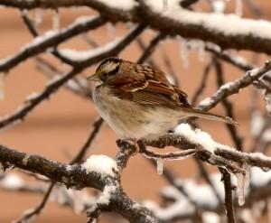 sparrow-300x247.jpg