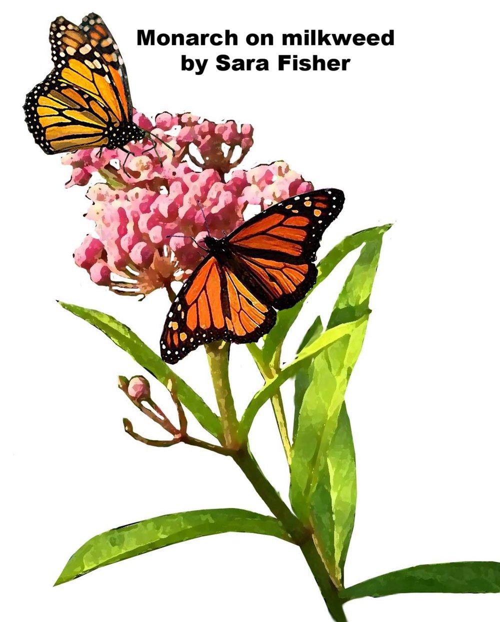 chert monarch sketch sara.jpg