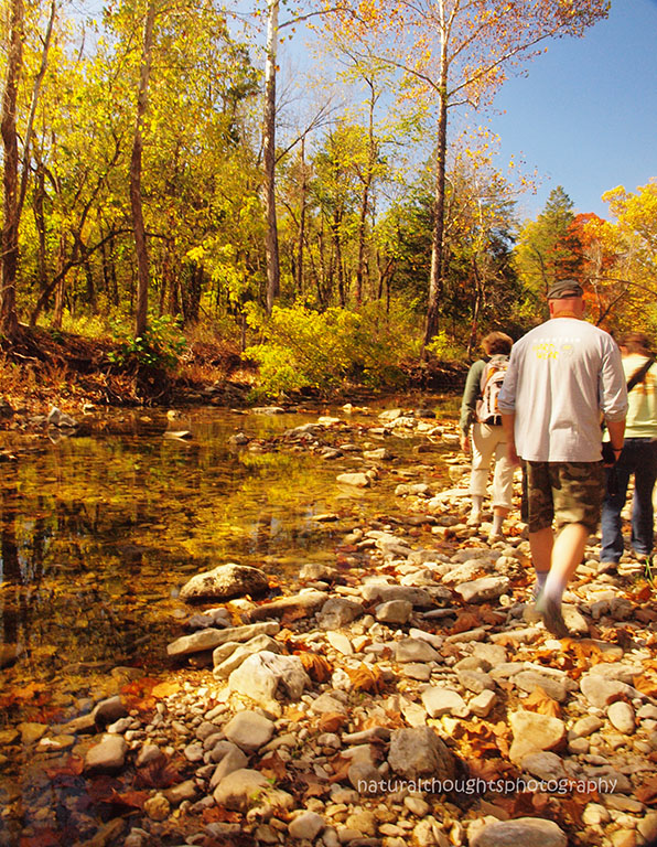 Fall Walk Along Bee Creek with Jeff Cantrell