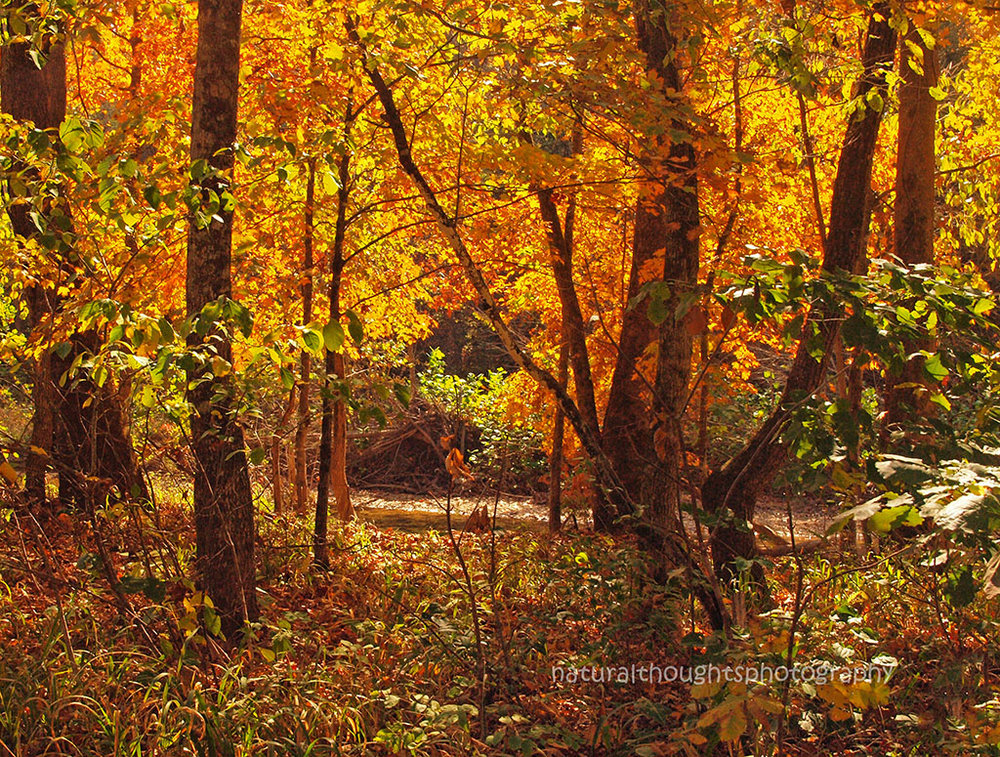 fall at bee creek ab web.jpg