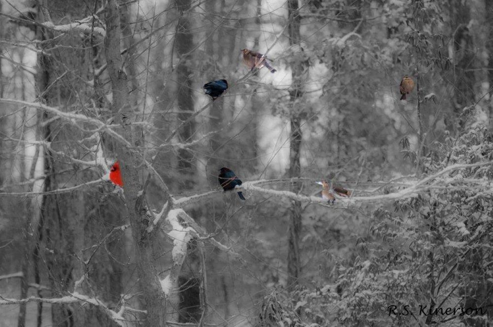 DSC_3907-winter birds rsk (Medium).jpeg