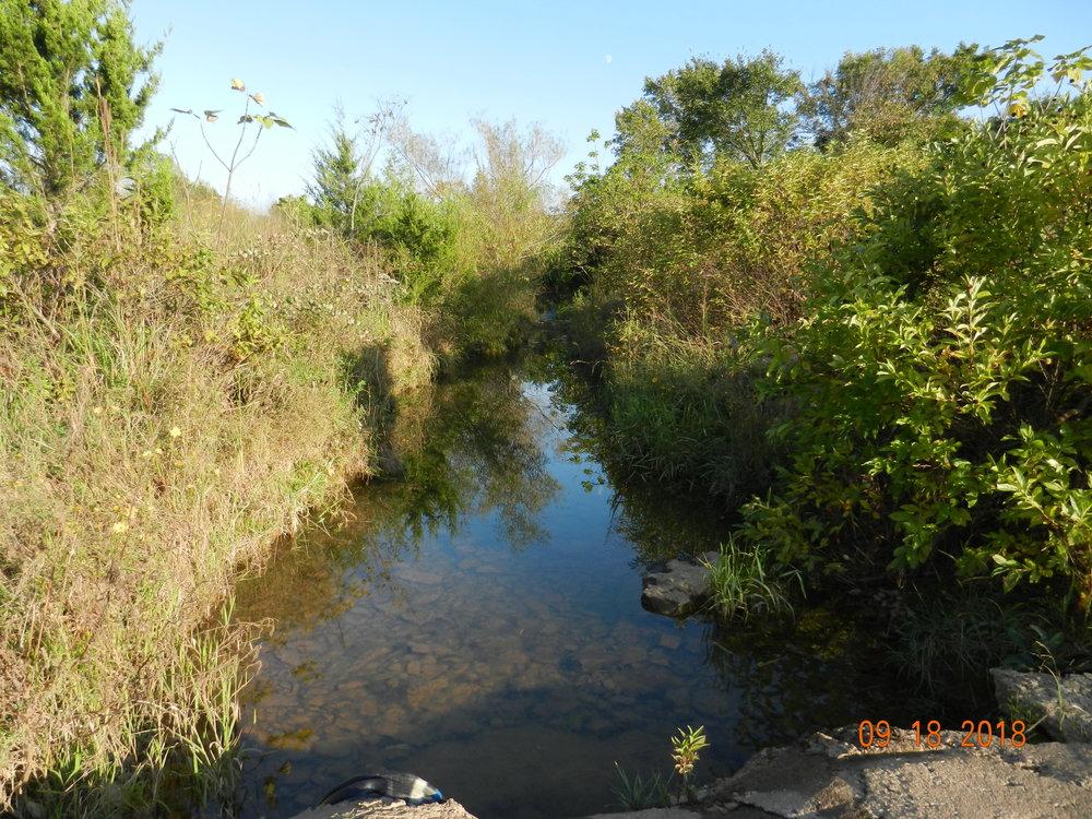 Ben's Branch Stream
